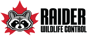 Raider Wildlife Control