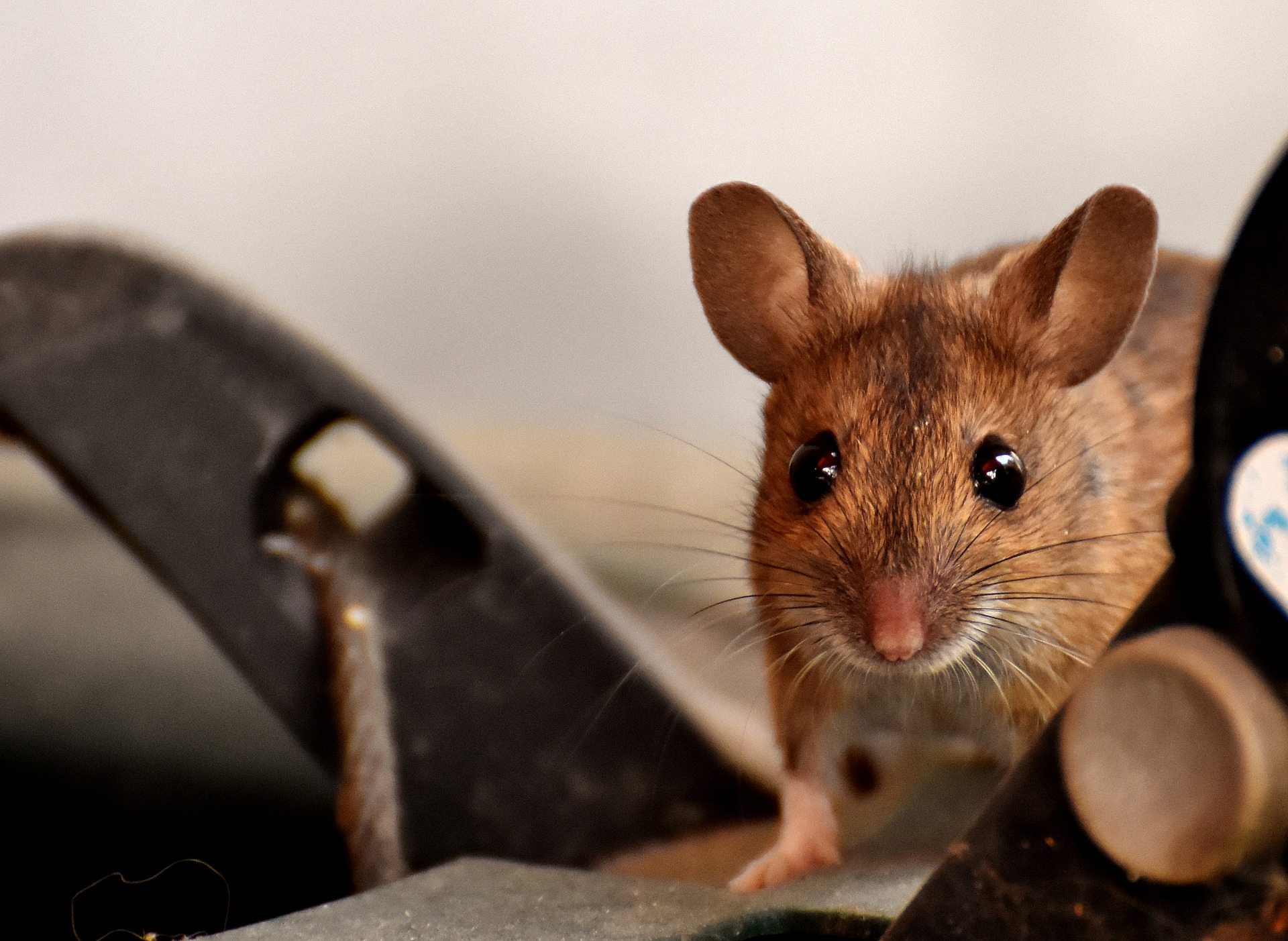 5 Signs You Have Rodents Around Your Home