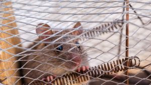 The Benefits of a Humane Wildlife Removal Service